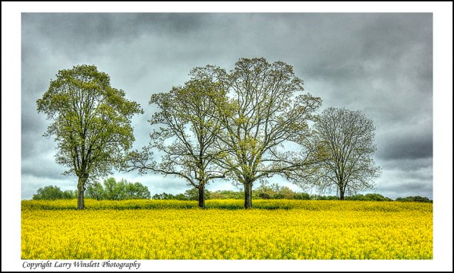 Field in Spring - Hart County, Georgia